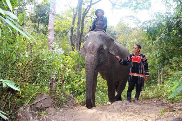 A file photo taken in 2014 of elephant Ya Tau. Photo: D.V. / Tuoi Tre
