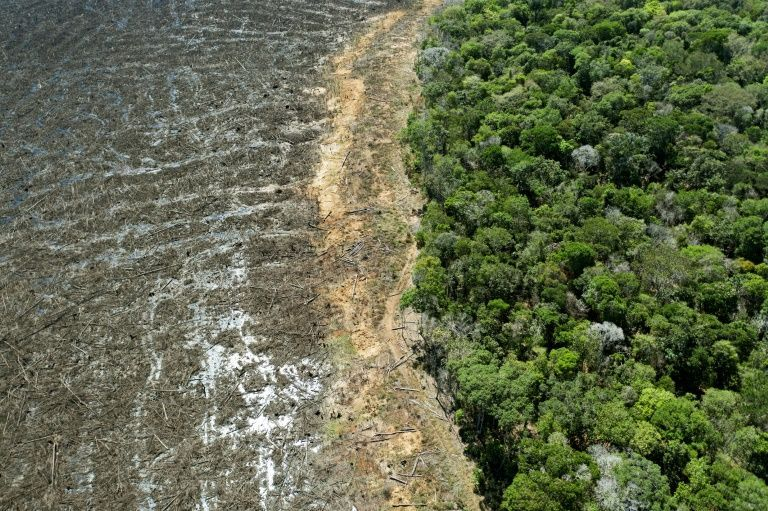 Aerial picture of a deforested area close to Sinop, Mato Grosso State, Brazil, taken on August 7, 2020. Photo: AFP