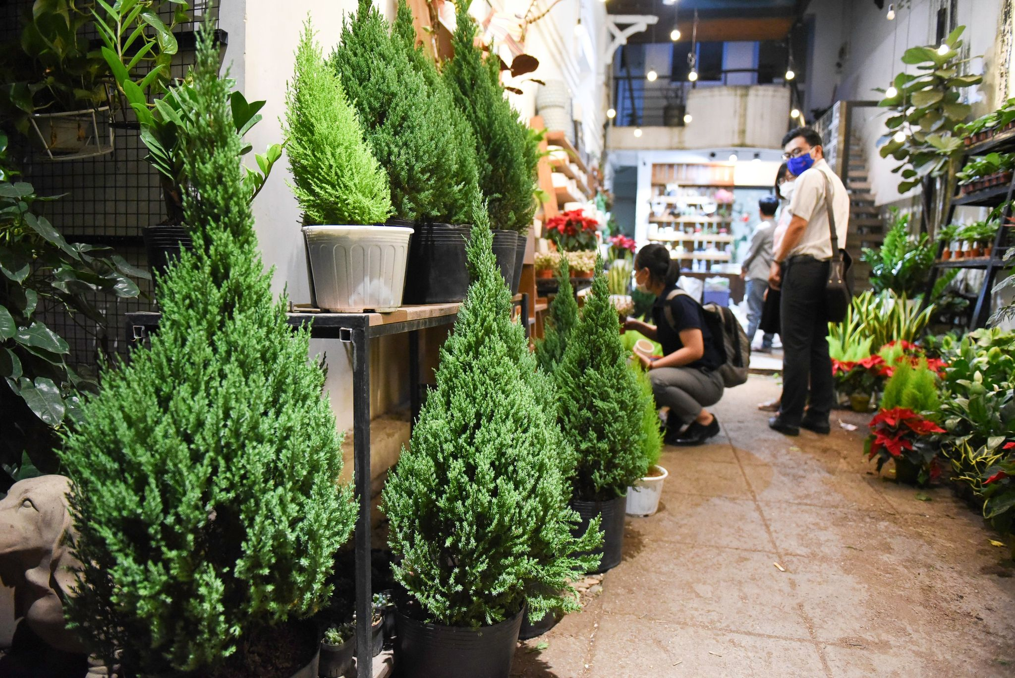 Evergreens are sold at a flower shop in Ho Chi Minh City's District 3. Photo: Ngoc Phuong/ Tuoi Tre News