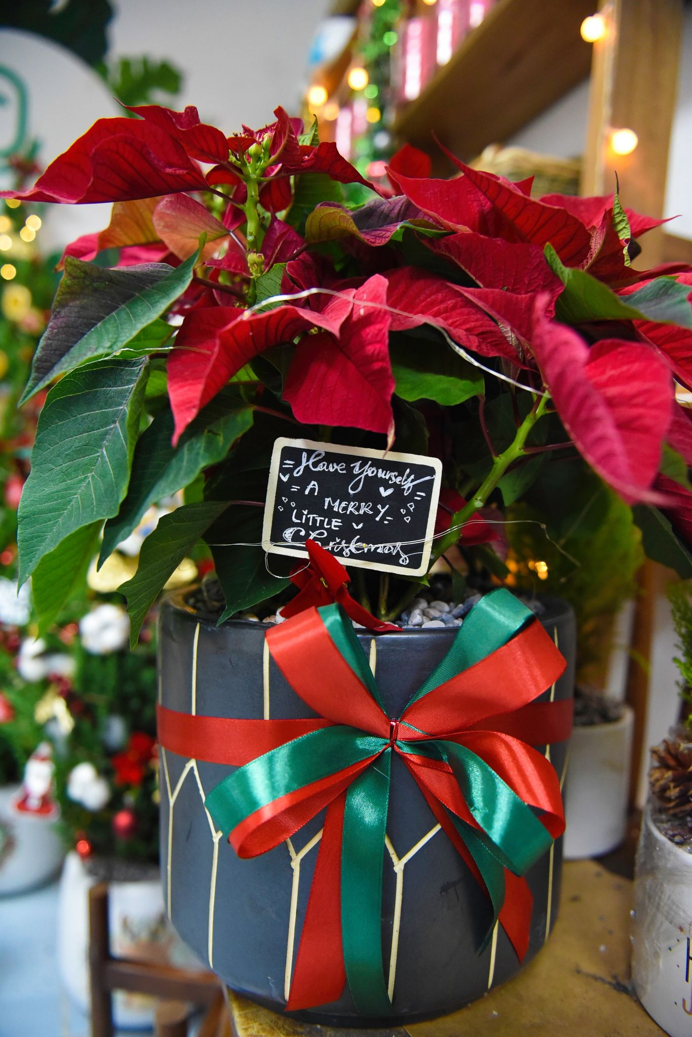 Poinsettia is also a favorite in the holiday season, with fully decorated ones fetching from around VND189,000 ($8) each in Ho Chi Minh City. Photo: Ngoc Phuong/ Tuoi Tre News