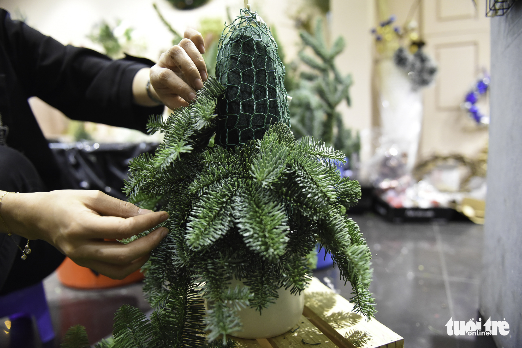 A small pine tree is created from fresh pine tree branches at a shop in Ho Chi Minh City. Photo: Bong Mai / Tuoi Tre