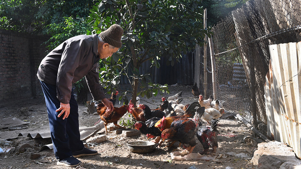 Nguyen Dang Che takes care of his poultry. Photo: Hoang Ngoc Thach