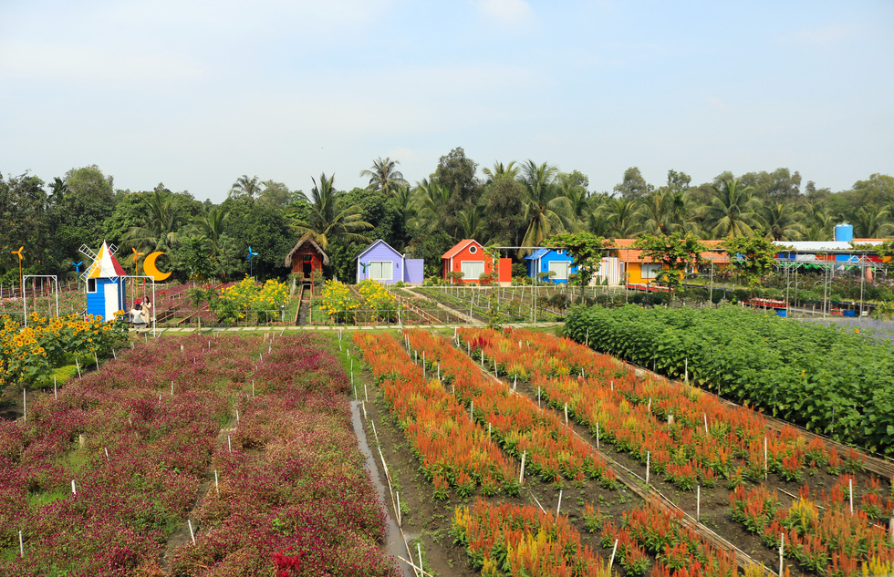 Flower beds at a botanical garden in Ho Chi Minh City's Nhi Binh Ward.