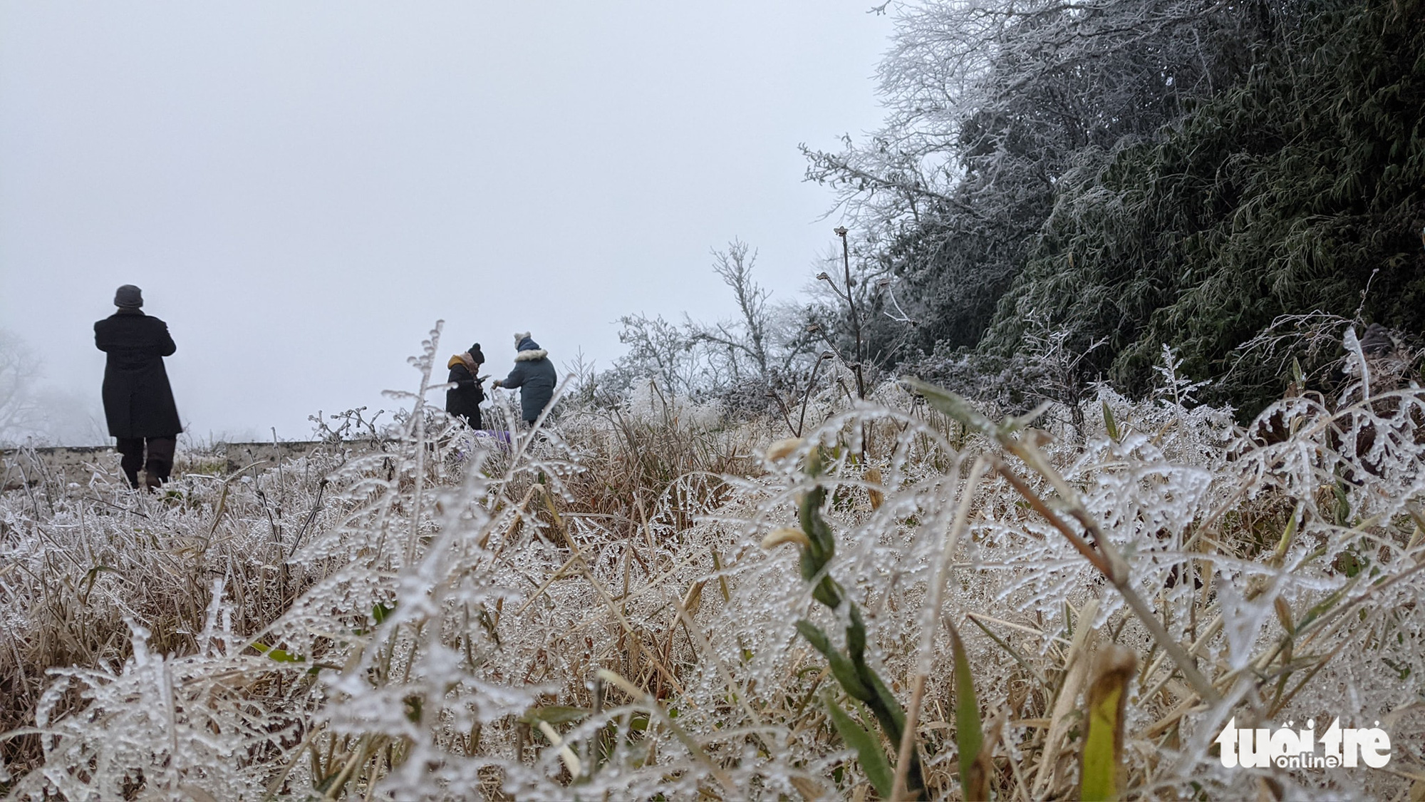 Frost has not melted on Phja Oac Mountain in Cao Bang Province, Vietnam at 7:30 am on January 8, 2021. Photo: Ha Cuong / Tuoi Tre