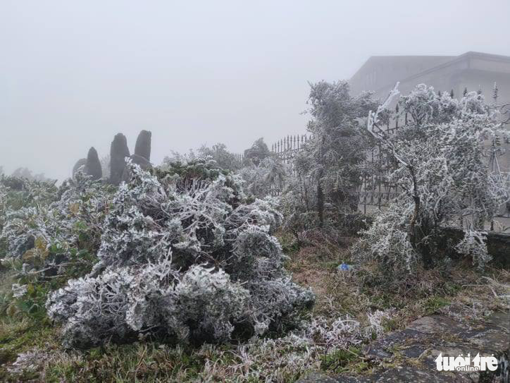 Trees are covered with frost on Mau Son Mountain in Lang Son Province, Vietnam, January 8, 2021. Photo: Minh Duc / Tuoi Tre