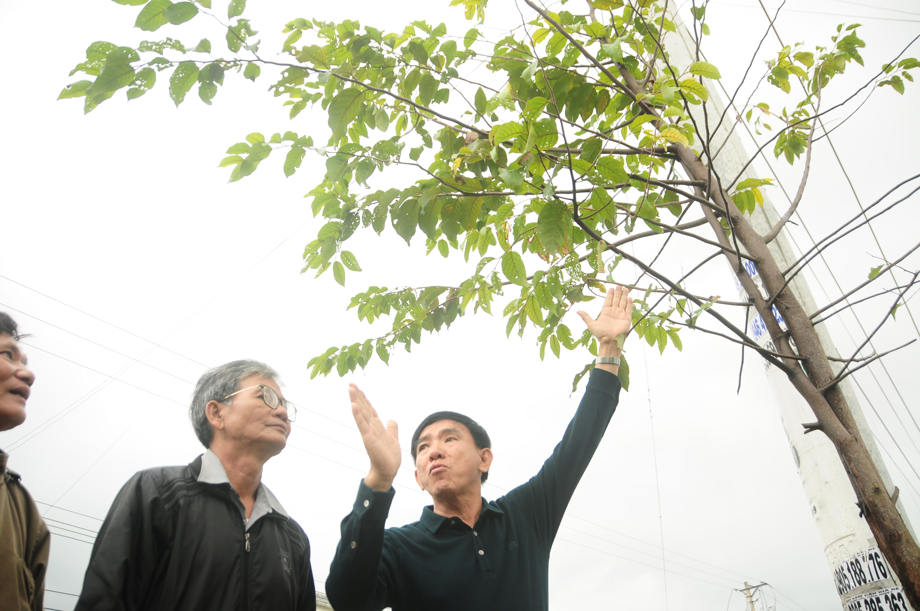 Seeds of hope: a former teacher's dream to plant one million trees in Vietnam