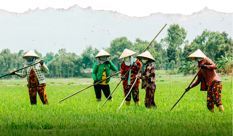 Mekong Delta: A 35-year miracle change of Vietnam's rice bowl