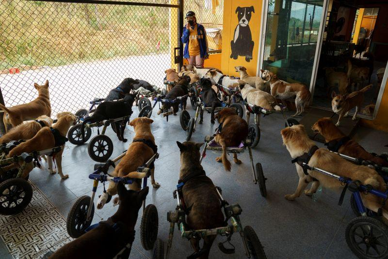 Thai shelter for disabled stray dogs threatened by pandemic