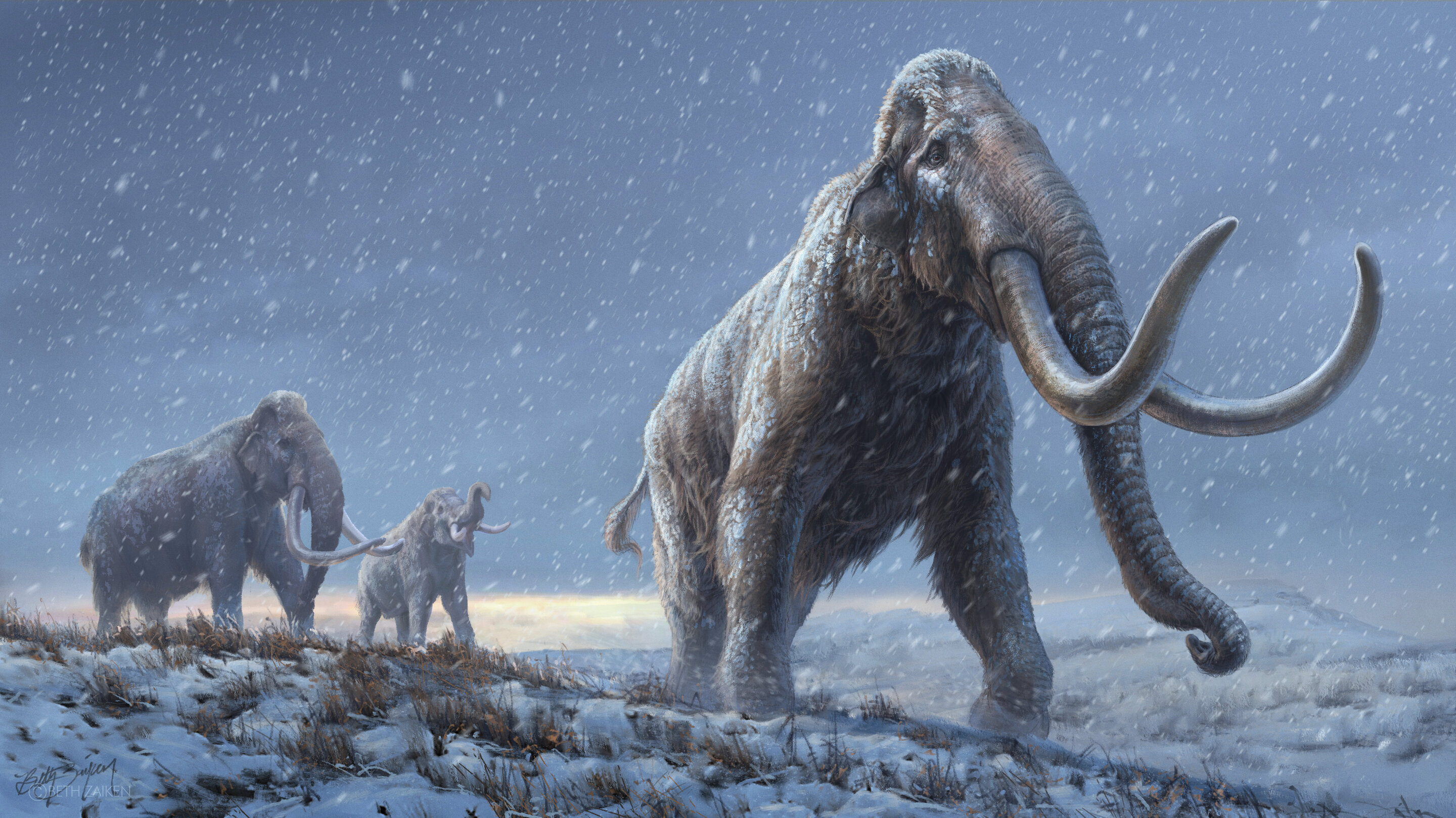 World's oldest DNA sequenced from million-year-old mammoths