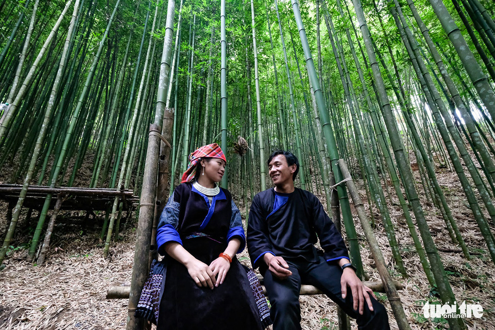Fairylike bamboo forest offers new livelihoods to mountainous residents in Vietnam