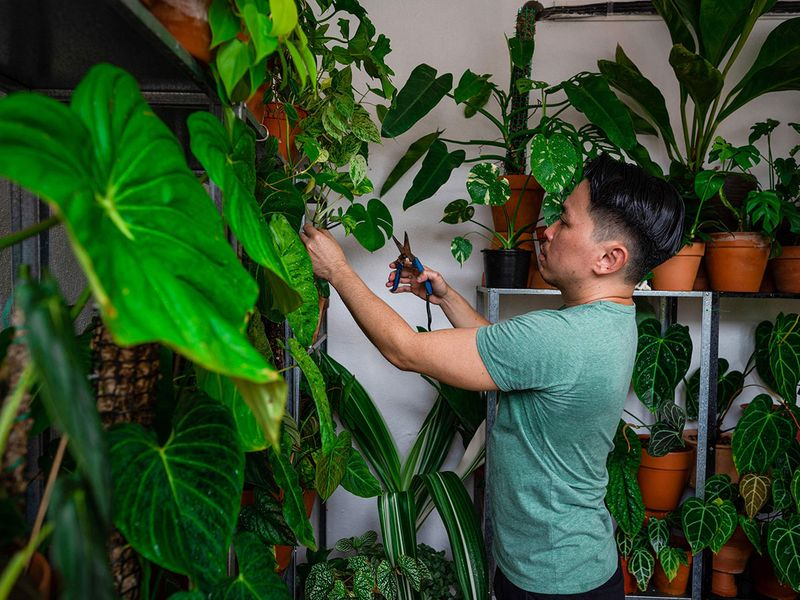 Bloom boom: Malaysians get passionate about pot plants