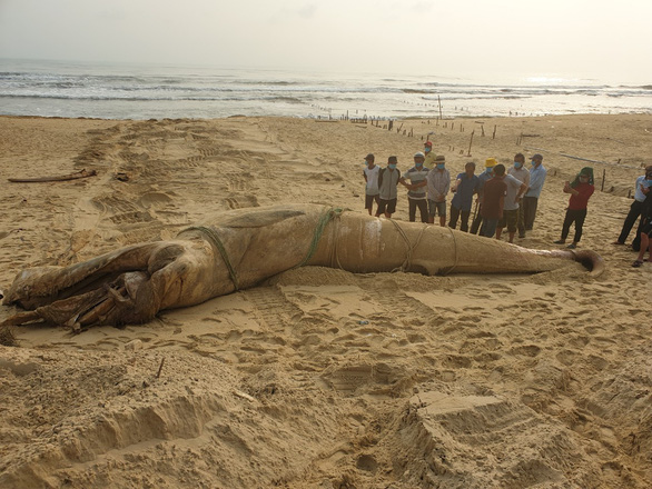 Massive whale carcass washes up on central Vietnam shore