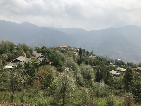 Docynia indica trees blossom in the mountains of the northern province of Son La in this picture taken in March 2021. Photo: Tuoi Tre