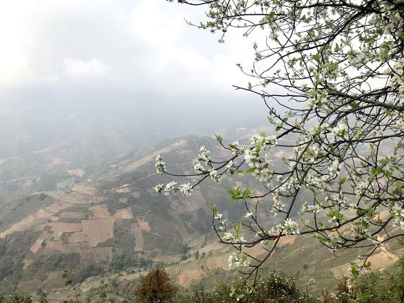 Docynia indica blossoms brighten northwest Vietnam