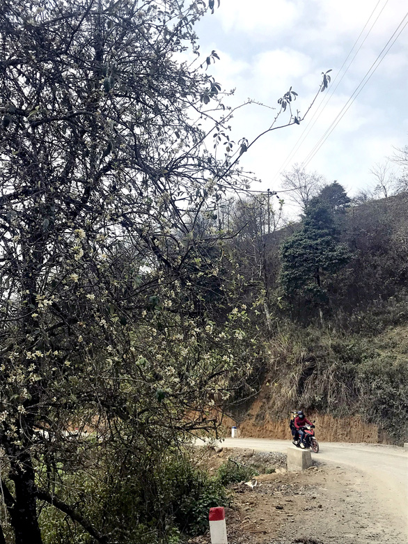 Locals drive past a blossoming docynia indica trees in the northern province of Son La's Ta Xua Commune in this picture taken in March 2021. Photo: Tuoi Tre