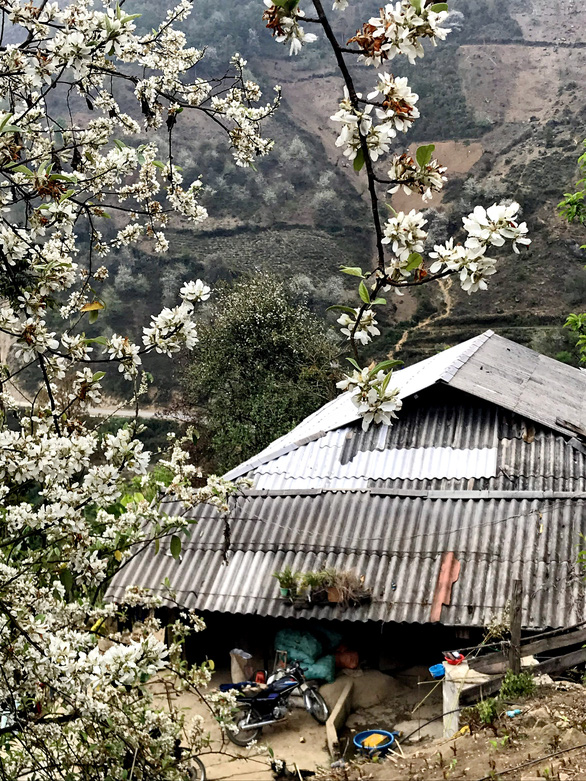 Docynia indica trees blossom afront a H'Mong house in the northern province of Son La in this picture taken in March 2021. Photo: Tuoi Tre