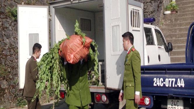 Vietnamese man illegally grows over 300 opium poppy plants in Hanoi