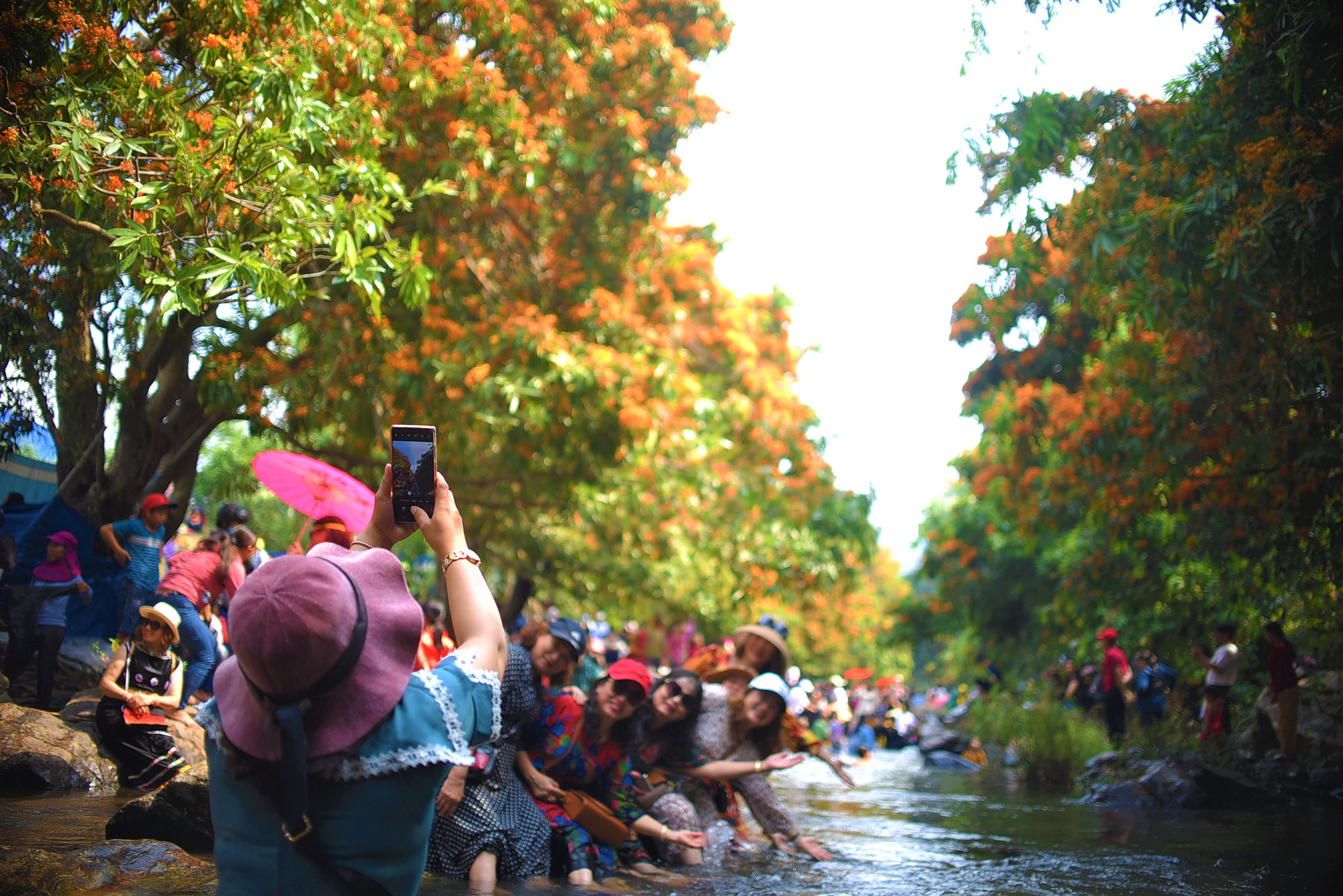 Stunning 'jungle flame' flowers lure tourists to Vietnam province