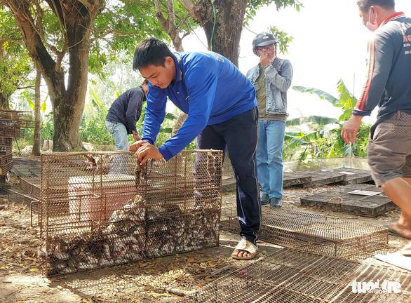 Rats! Furry rodents a best-seller in Vietnam's Mekong Delta