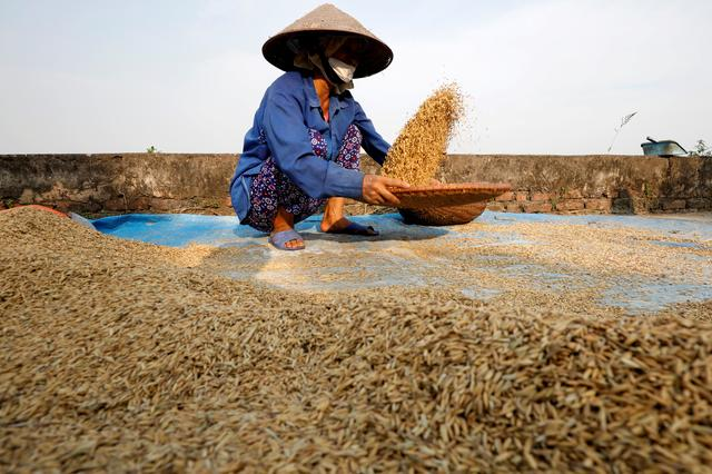 Asia rice-Vietnam rates scale more than 9-year high on strong demand