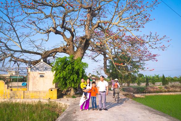 A kapok tree is seen in Kien Xuong District, Thai Binh Province. Photo: Van Duy / Tuoi Tre