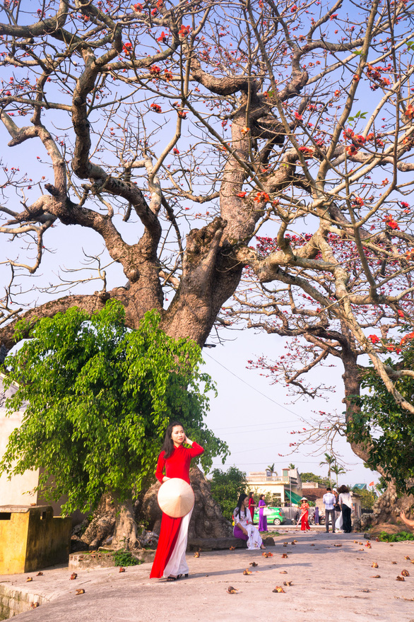 A woman poses under an ancient kapok tree in Quang Binh Province. Photo: Van Duy / Tuoi Tre
