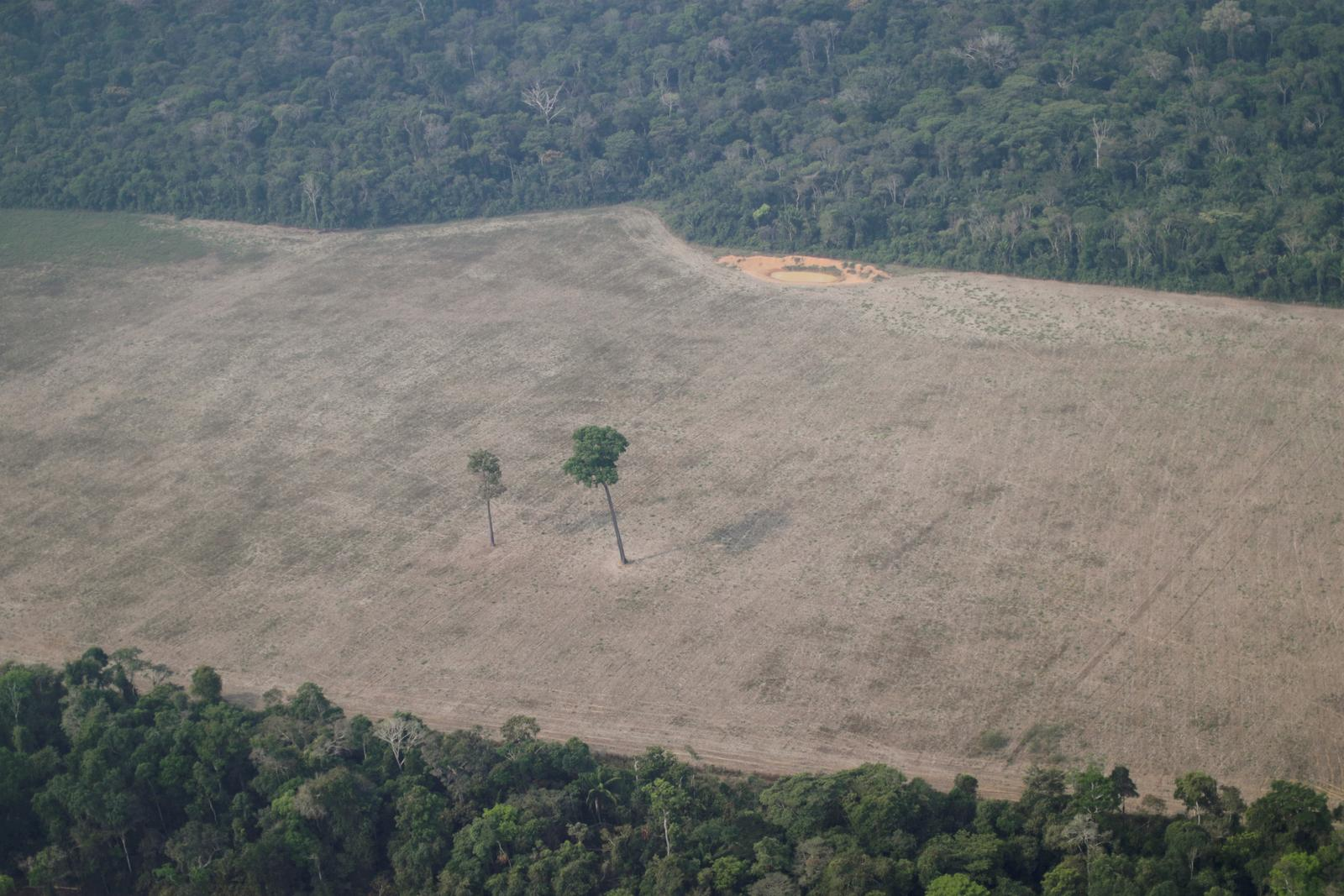Brazil seeks $1 billion in foreign aid to curb Amazon deforestation by 30-40% -environmental minister