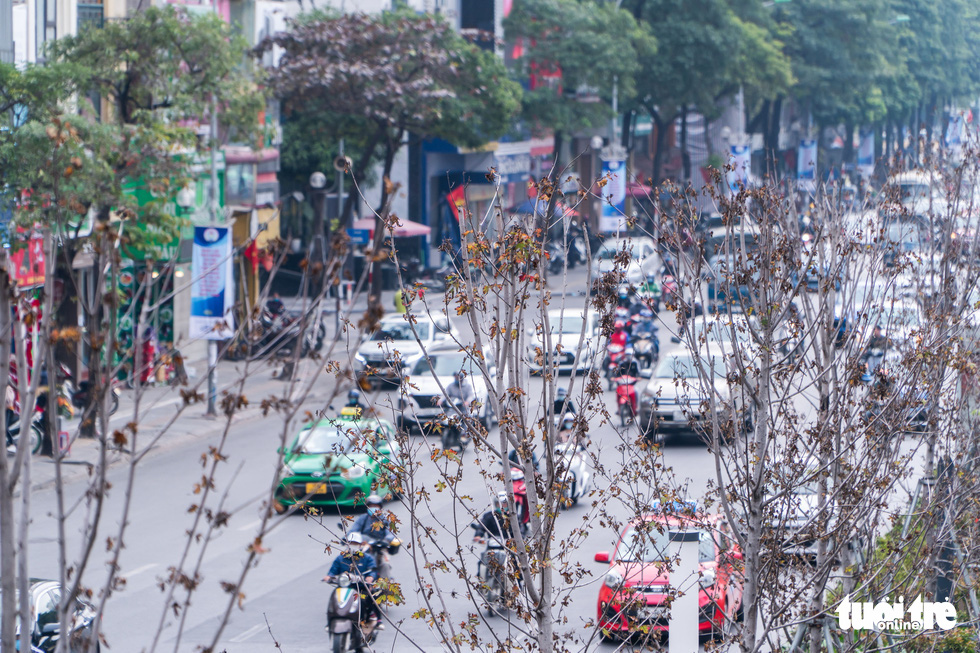 Hanoi to replace red maple trees along two major streets