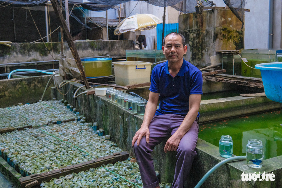 Hanoi man farms betta fish in discarded bottles