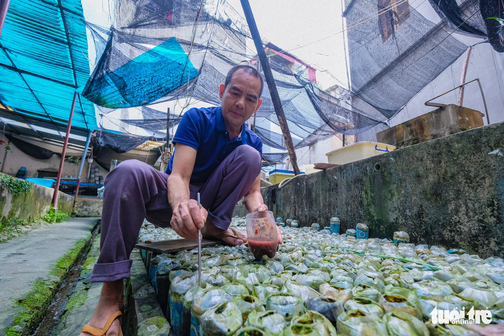 Tran Ngoc Thang feeds larvae to fish in his farm in Ngoc Ha Street, Ba Dinh District, Hanoi. Photo: Nam Tran / Tuoi Tre