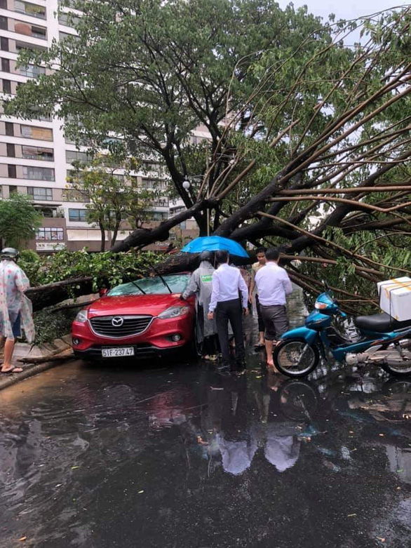 Fallen trees crush a car in Phu My Hung Urban Area in District 7, Ho Chi Minh City, April 12, 2021. Photo: M.H. / Tuoi Tre