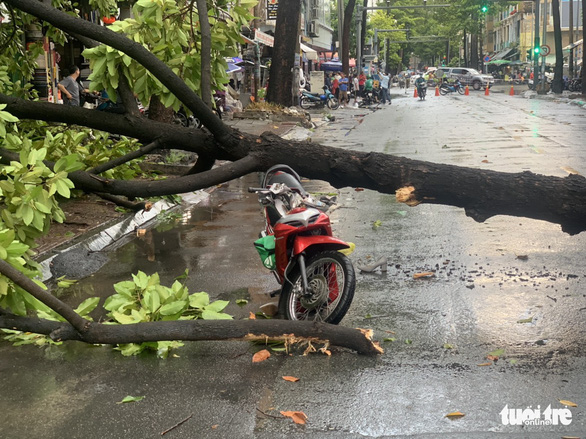 Two injured in tree collapse amid gale wind in Ho Chi Minh City