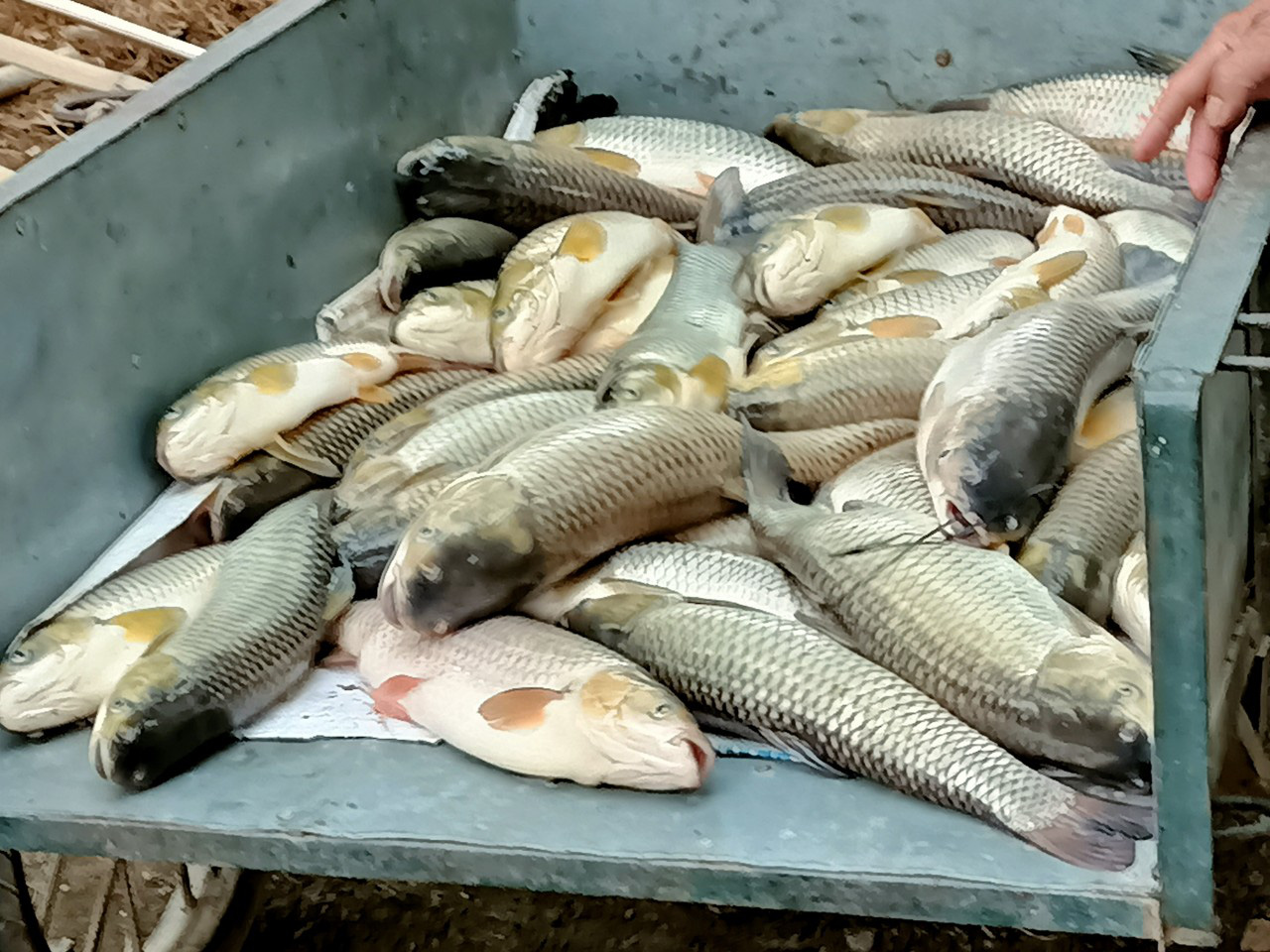 14 tonnes of farm-raised fish die within one day in north-central Vietnam