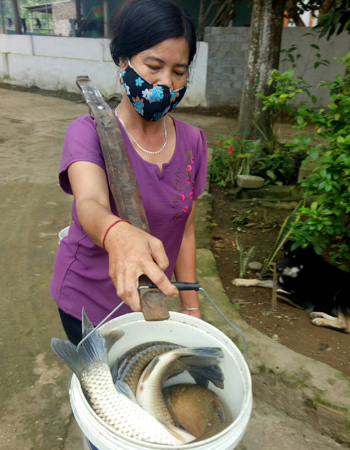 A woman carries buckets containing dead fish in Cam Thuy District, Thanh Hoa Province, Vietnam, April 14, 2021. Photo: Ha Dong / Tuoi Tre