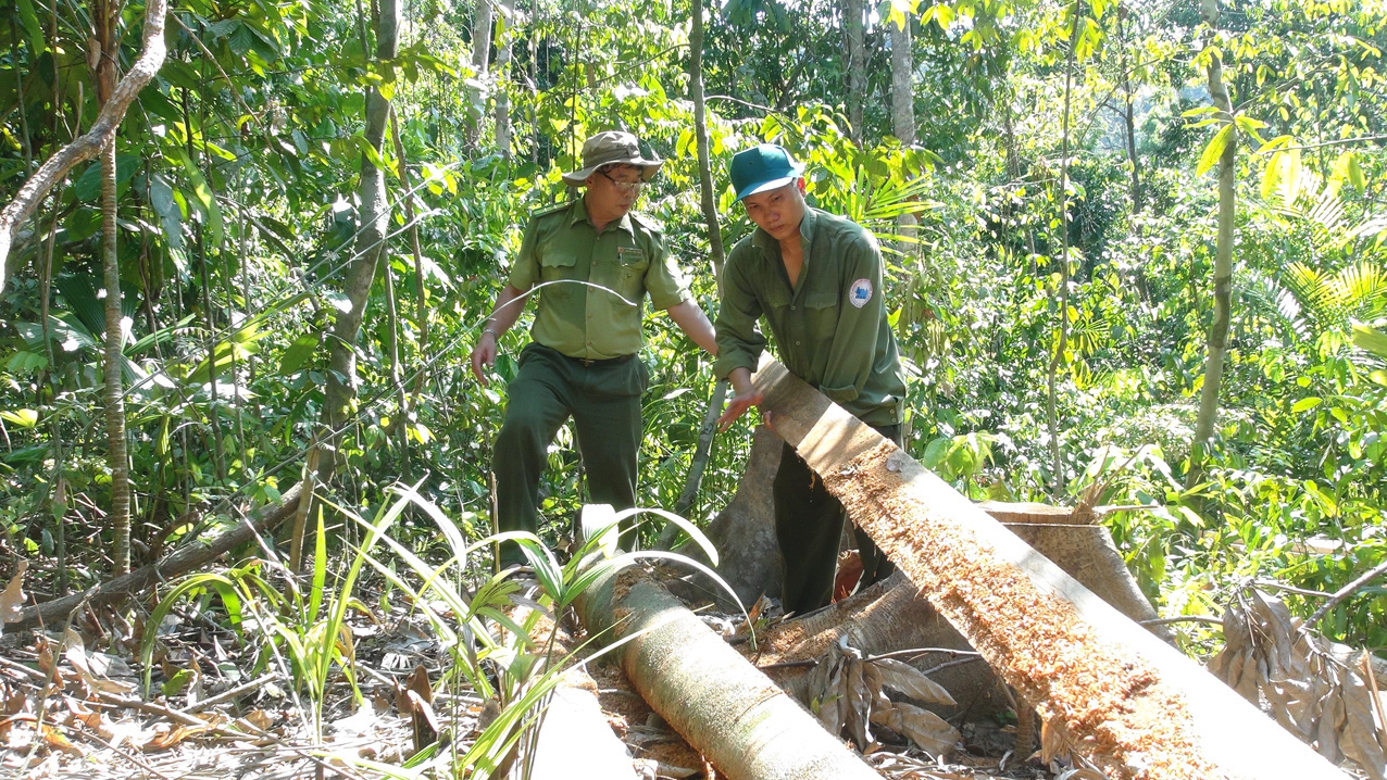 Five rangers prosecuted for irresponsibility, power abuse in deforestation case in south-central Vietnam