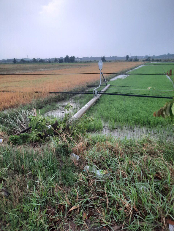 A pole is seen on a paddy field in Trung Lap Thuong Commune, Cu Chi District, Ho Chi Minh City, April 19, 2021. Photo: Tran Tam / Tuoi Tre