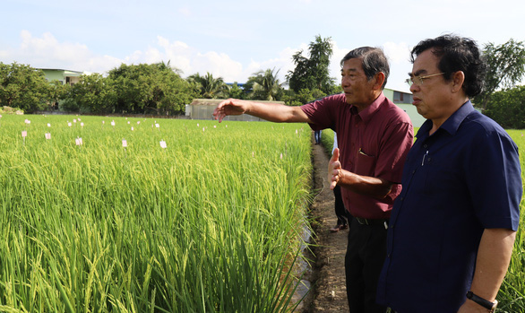 American firms reportedly register Vietnam's ST25 rice, once world's best, for trademark protection in US