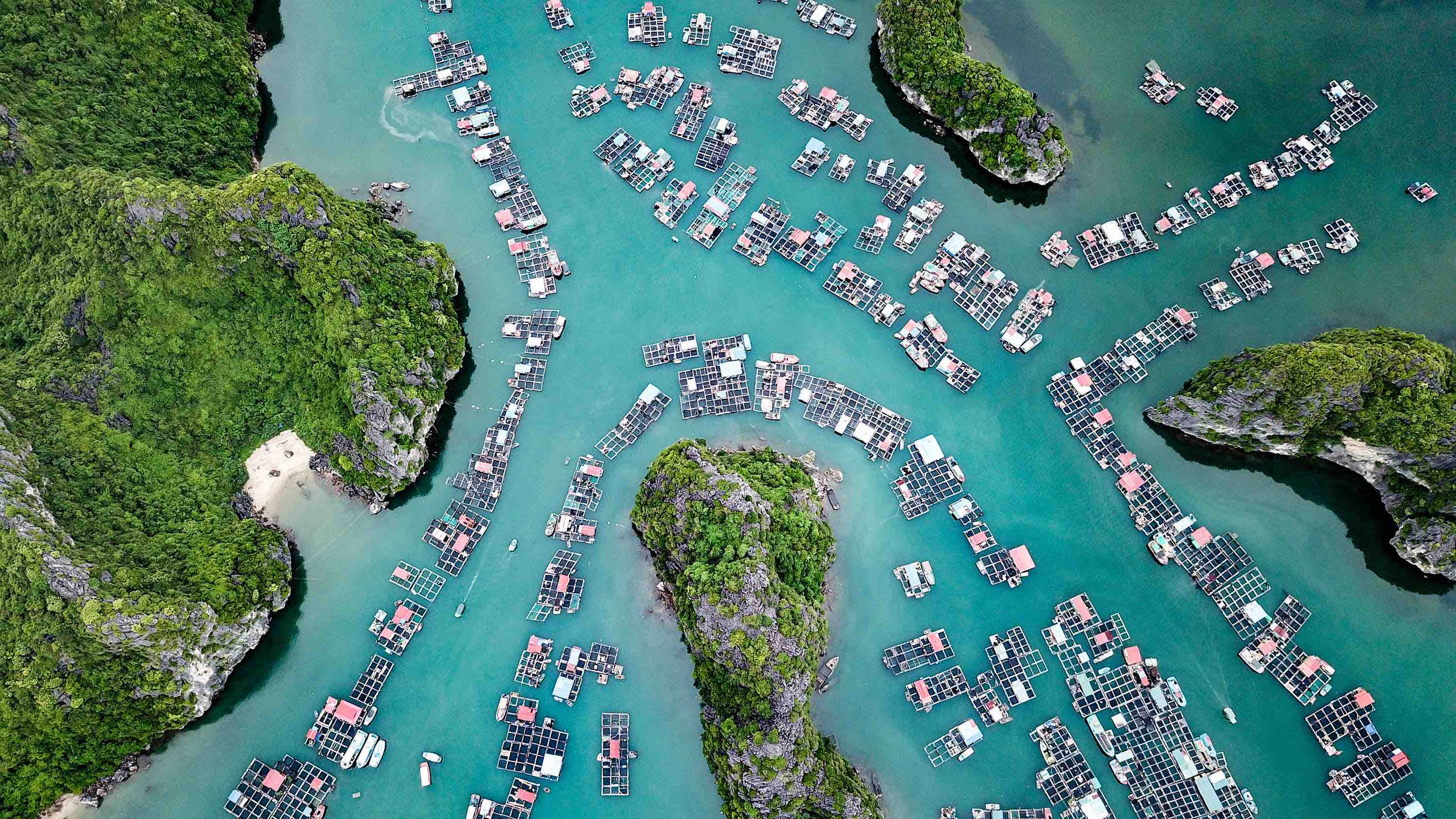 An aerial view picture captures the spectacular beauty of Lan Ha Bay in Ca Ba National Forest, Hai Phong City. Photo: Nam Tran / Tuoi Tre