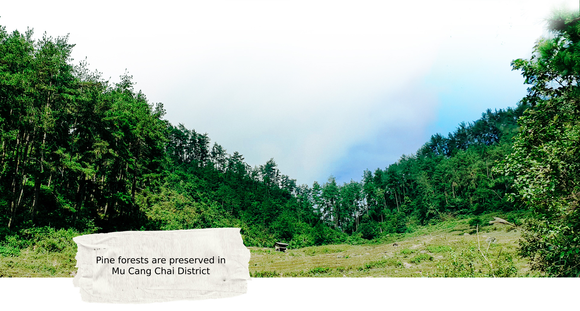 Pine forests are preserved in Mu Cang Chai District, Yen Bai Province, Vietnam. Photo: Viet Dung / Tuoi Tre