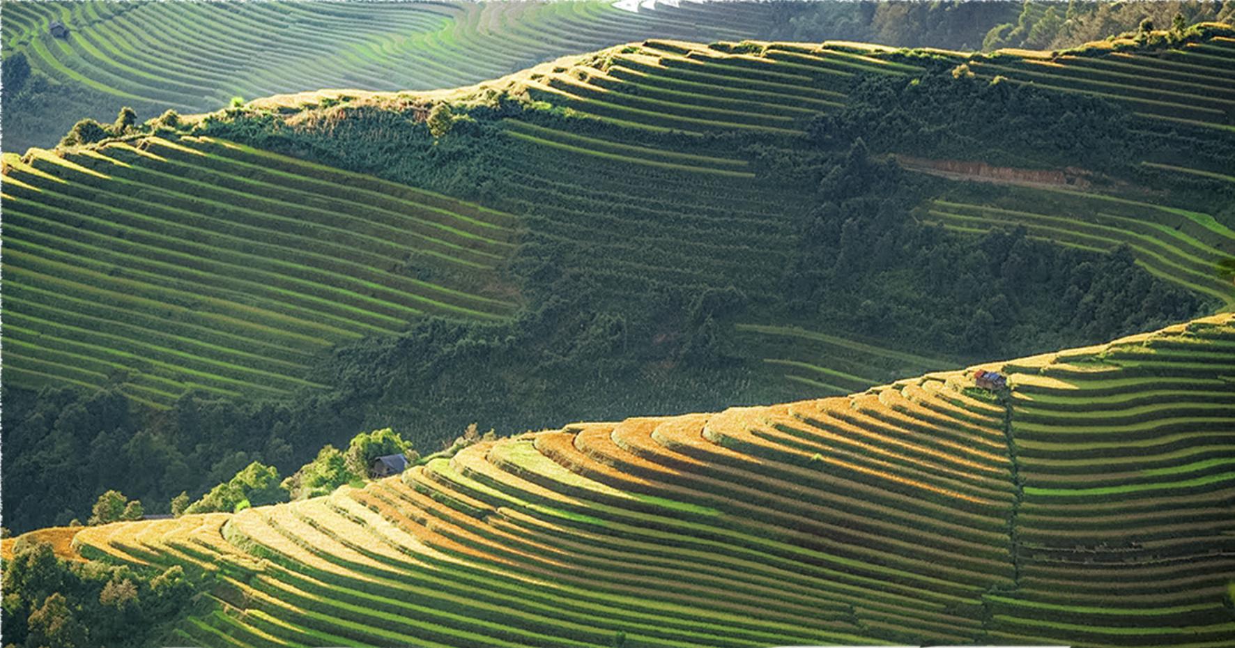 Terraced fields in Mu Cang Chai District, Yen Bai Province, Vietnam. Photo: T.V.H. / Tuoi Tre