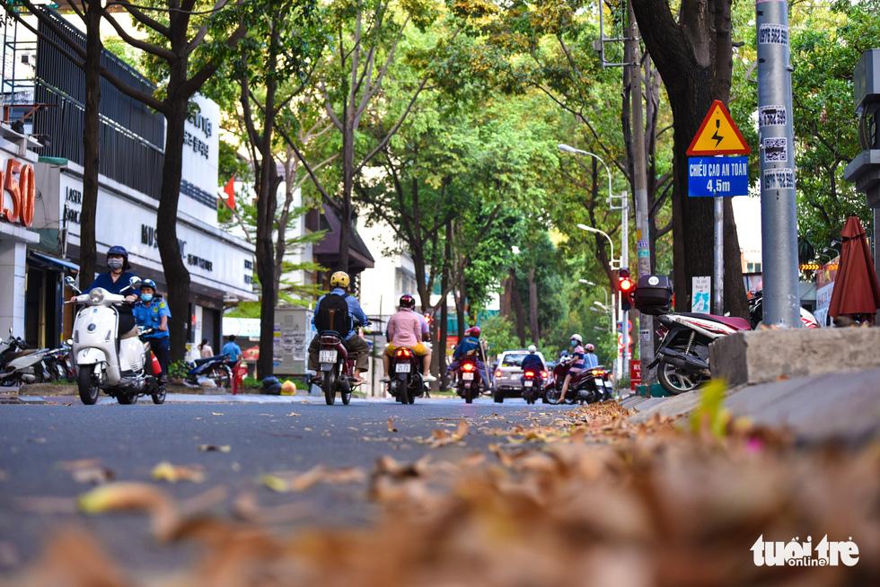 Fallen cho nau seeds on a street in Ho Chi Minh City. Photo: Ngoc Phuong / Tuoi Tre
