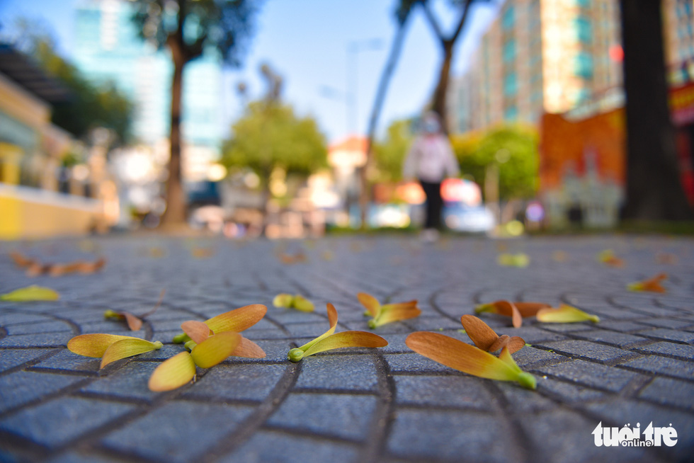 Cho nau seeds cover a sidewalk in Ho Chi Minh City's District 1. Photo: Ngoc Phuong / Tuoi Tre