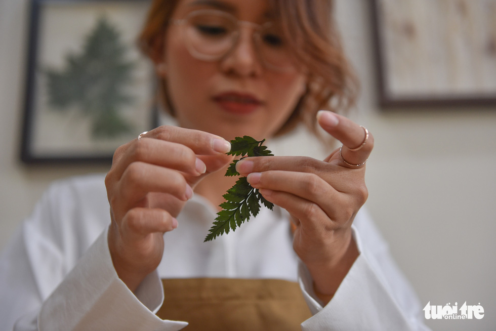 Dried, pressed leaves are glued before being arranged on a glass surface. – Photo: Ngoc Phuong/Tuoi Tre