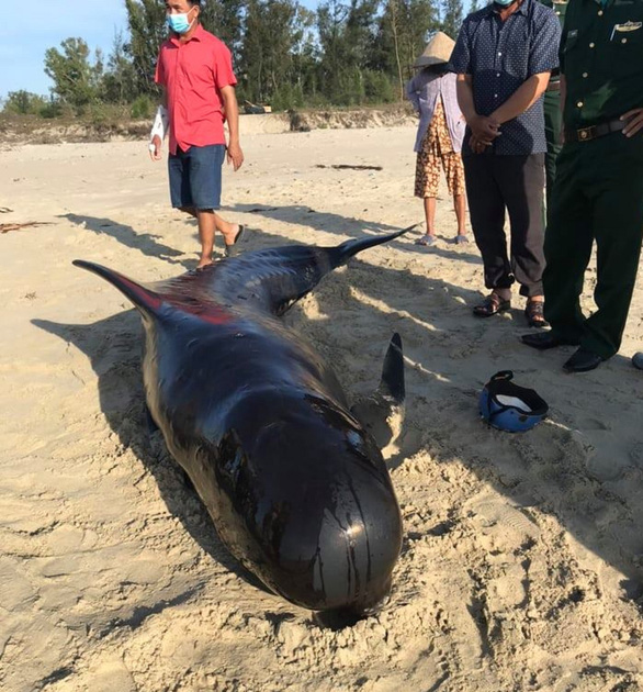 Whale dies after washing up twice on central Vietnam beach