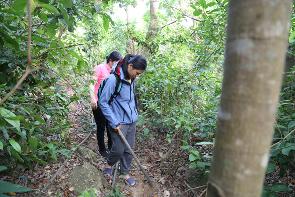 Binh and Tuyet search for traps in Son Tra Forest on their free day. Photo: Doan Nhan/Tuoi Tre