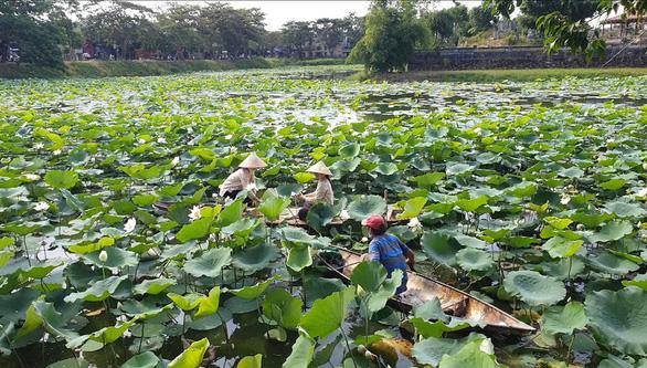 People produce lotus tea on Tinh Tam Lake. Photo: Thai Loc / Tuoi Tre