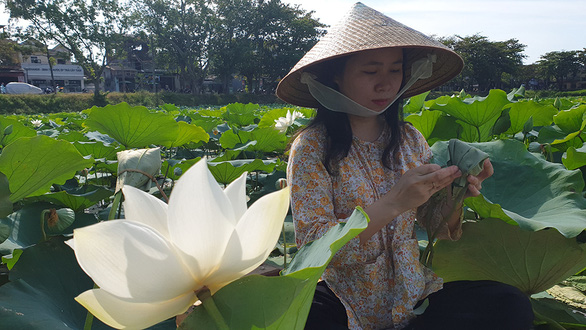 A woman wraps a lotus bud after filling it with tea. Photo: Thai Loc / Tuoi Tre