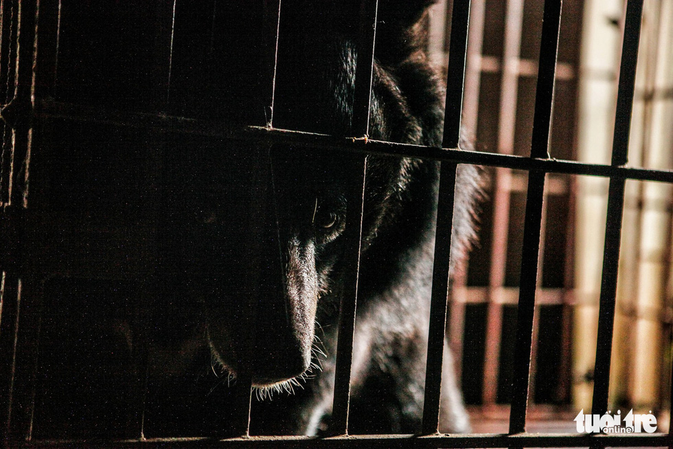 Vietnamese man fined nearly $30,500 for trading endangered bear's limbs