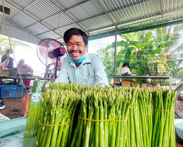 Growing asparagus in Vietnam's rice bowl
