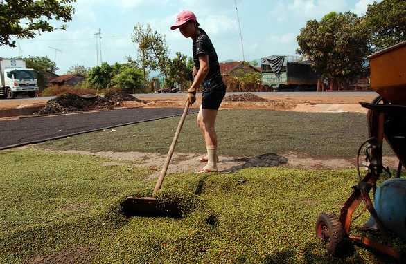 Vietnam farmers warned not to expand black pepper crop to avoid glut